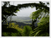 Classic Matte Paper Wooden Framed Poster - View from the closed section of PR 191 from Naguabo - The Rio Sabana Park - a part of El Yunque. - Yunque Store