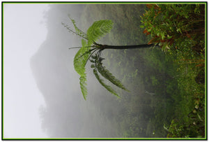 Deep V-Neck One-piece Swimsuit - High Mountain Fern Palm in Fog - Toro Negro rainforest Park Over 4,000 feet altitude - Highest in Puerto Rico - Yunque Store