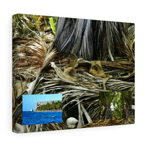 Dry branches of Coconut Palms and views - a unique untouched palm forest - Mona Island - the Galapagos of the Caribbean - in Pajaros beach Canvas Printify