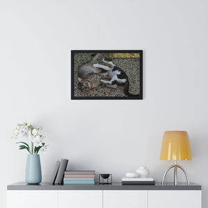 EU Print - Premium Framed Horizontal Poster - The Cats Mimi and Dante learn the art of fighting and playing - Puerto Rico - Yunque Store