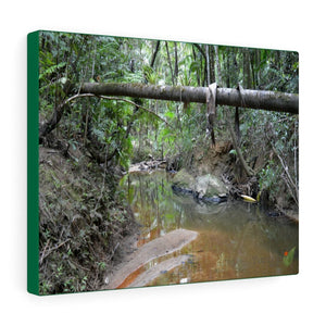 Explorations - Smaller Low-Cost Canvas Gallery Wraps - The Holy Spirit river explorations - El yunque rainforest PR - Yunque Store