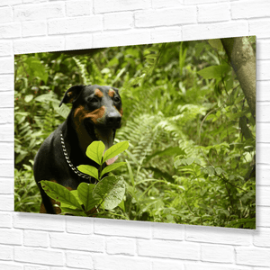 Forest explorer dog FIRO - in the Rio Sabana Park of El Yunque Rainforest Puerto Rico - Yunque Store
