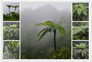 GELATO Global Print - Classic Semi-Glossy SILK Paper Wooden Framed Poster - View from PR Highest Road - PR 143 in Toro Negro Park Composite of the Fern palms - Yunque Store
