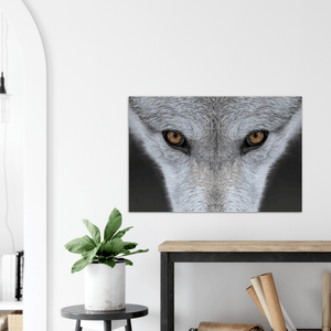 GELATO GLOBAL PRINT - Landscape Aluminum Print - Closeup of the eyes of a wolf - Yellowstone National Park, WY USA - Yunque Store