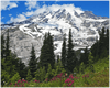GELATO GLOBAL PRINT - Landscape Aluminum Print - Panorama of Mt. Rainier with wildflowers - Mt. Rainier National Park, WA USA - Yunque Store