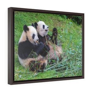 GREAT CHINA COLLECTION: Horizontal Framed Premium Gallery Wrap Canvas - Giant pandas, bear pandas, baby panda and his mother eating bamboo - Yunque Store