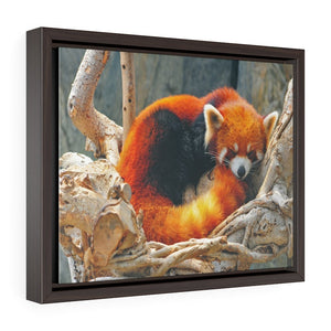 GREAT CHINA COLLECTION: Horizontal Framed Premium Gallery Wrap Canvas - Sleeping red panda at the ocean park in Hong Kong - Yunque Store