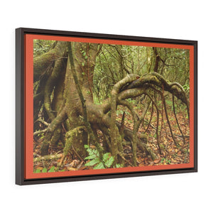 Horizontal Framed Premium Gallery Wrap Canvas - Dancing Trees - Near Old Pal warped trees typical of cloud high-altitude rain forest El Yunque PR - Yunque Store