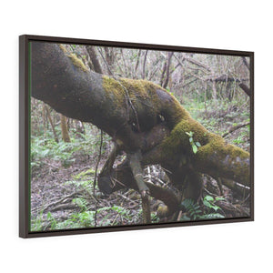 Horizontal Framed Premium Gallery Wrap Canvas - The Rio Sabana river trail - upper sections after Hurr. Maria - El Yunque rainforest PR - No1 Canvas Printify