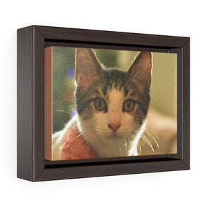 Horizontal Framed Premium Gallery Wrap Canvas - US print - The home cat mini Dante watches the camera - Isabela Puerto Rico - Yunque Store