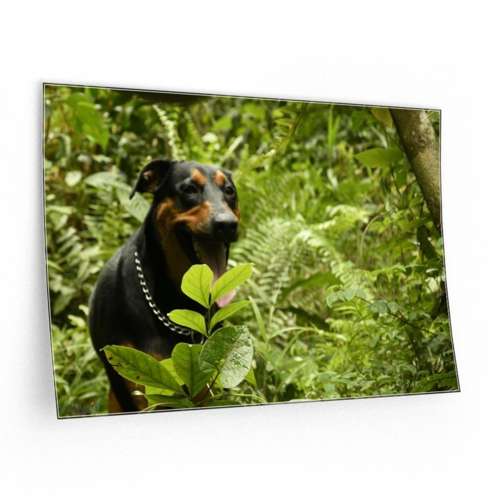 ILovePets - Wall Decals - PR Pets and animals - dog Firo happy exploring - Yunque Store