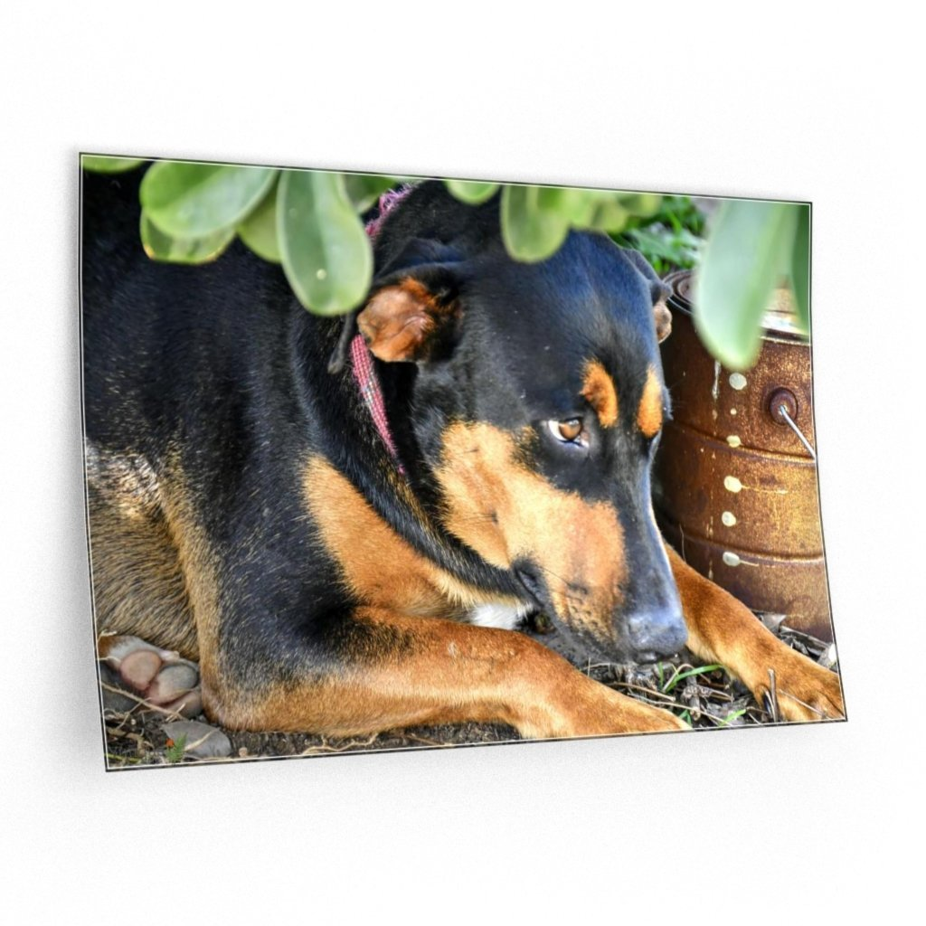 ILovePets - Wall Decals - PR Pets and animals - dog Firo outside - Yunque Store