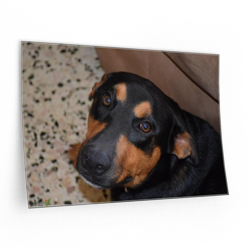 ILovePets - Wall Decals - PR Pets and animals - the explorer dog Firo loving stare - Yunque Store