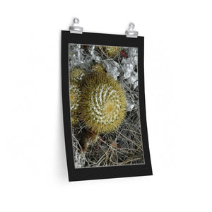 Low cost quality Posters - Pristine and remote - Cactus above Pajaros Beach - in Mona Island PR Poster Printify