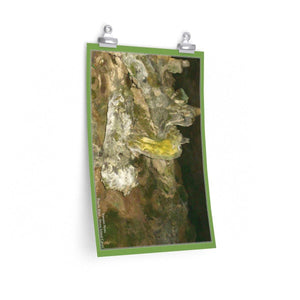 Low cost quality Posters - Pristine and remote - Pajaros Beach caves - in Mona Island PR Poster Printify