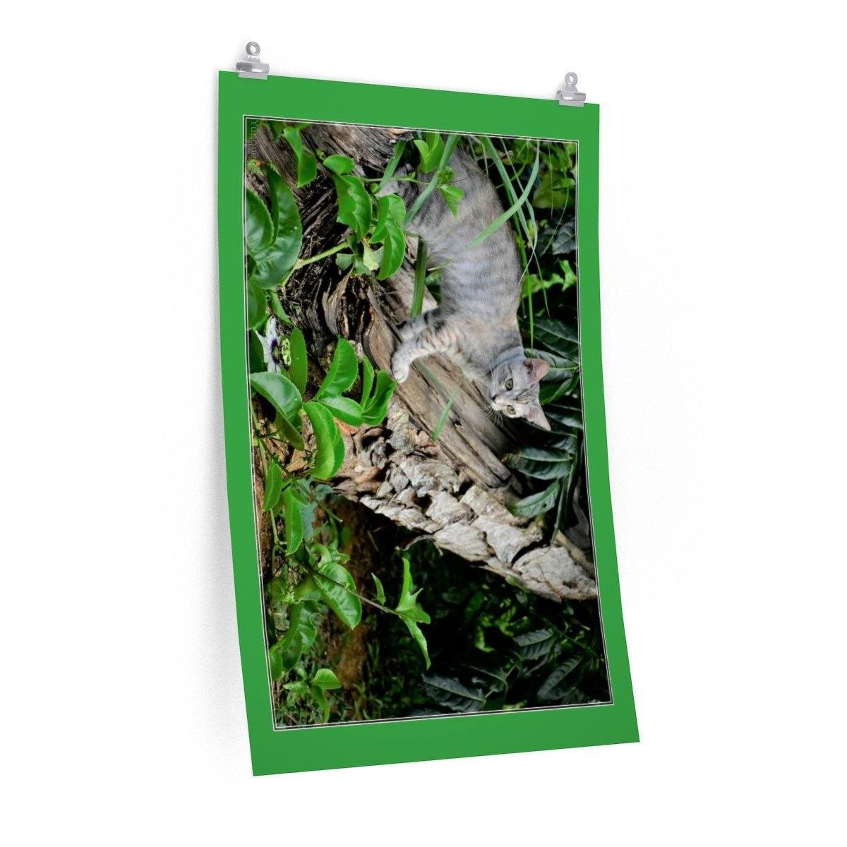 Low cost top-quality Posters - PR Pets and Animals - Baby cat and the flower Poster Printify