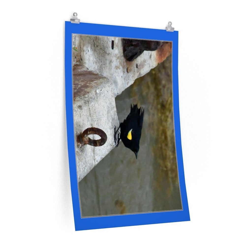 Low cost top-quality Posters - PR Pets and Animals - Birds of Mona - Mariquita Poster Printify