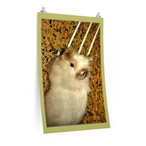 Low cost top-quality Posters - PR Pets and Animals - Home Rabbits Poster Printify