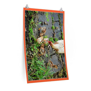 Low cost top-quality Posters - PR Pets and Animals - Love of the Mother Chicken Poster Printify