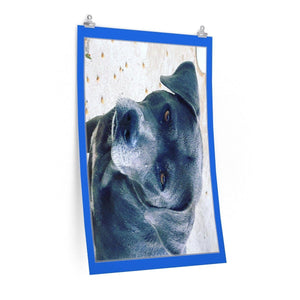 Low cost top-quality Posters - PR Pets and Animals - Puppies of Stray Dogs Poster Printify