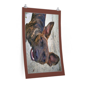 Low cost top-quality Posters - PR Pets and Animals - Stray dogs Poster Printify