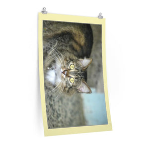 Low cost top-quality Posters - PR Pets and Animals - The Cat Fluffy's hard life - Yunque Store