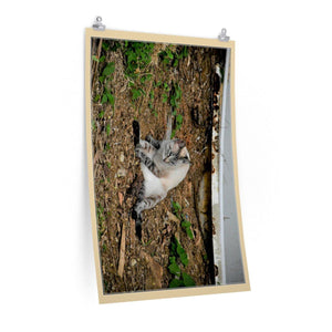 Low cost top-quality Posters - PR Pets and Animals - The Cat Gatin Garcia Poster Printify