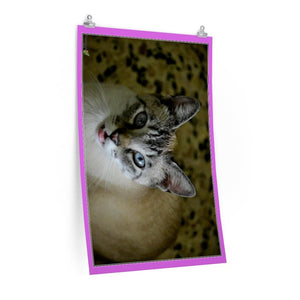 Low cost top-quality Posters - PR Pets and Animals - The Cat Gatin Garcia smiles - Yunque Store