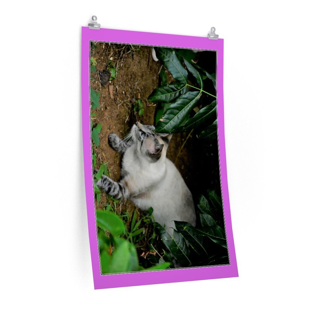 Low cost top-quality Posters - PR Pets and Animals - The Cat Gatin Garcia strikes - Yunque Store
