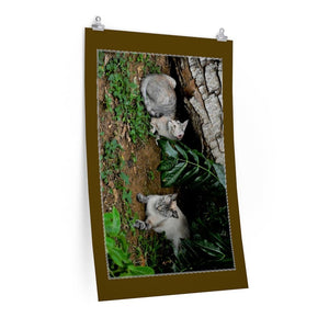 Low cost top-quality Posters - PR Pets and Animals - The Cats Gatin Garcia and Baby - Yunque Store