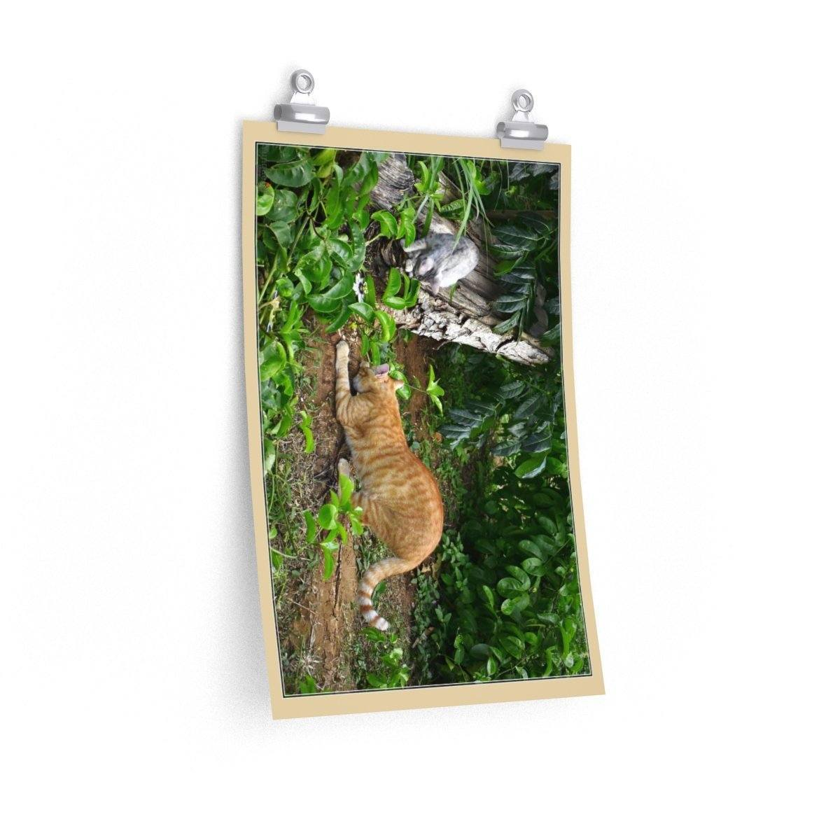 Low cost top-quality Posters - PR Pets and Animals - The Cats Play Poster Printify
