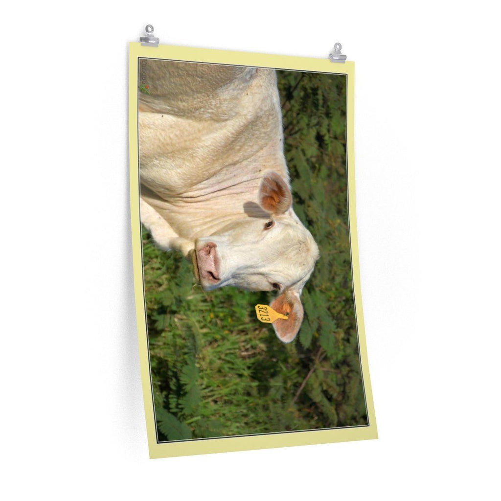 Low cost top-quality Posters - PR Pets and Animals - The Cow Poster Printify