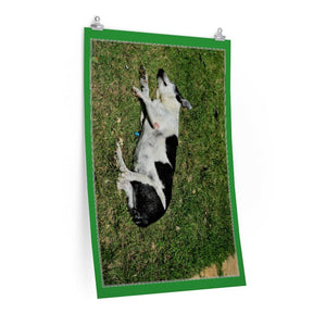 Low cost top-quality Posters - PR Pets and Animals - The Dog Manchas working hard - Yunque Store
