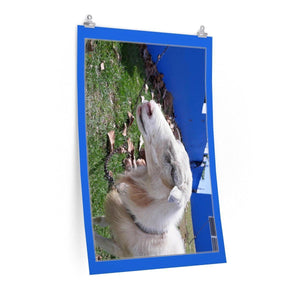 Low cost top-quality Posters - PR Pets and Animals - The Goat Poster Printify