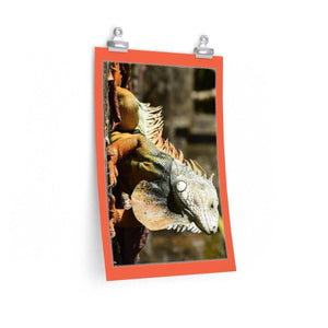 Low cost top-quality Posters - PR Pets and Animals - The Iguana Poster Printify