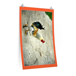 Low cost top-quality Posters - PR Pets and Animals - The Rooster Poster Printify