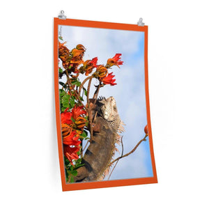 Low cost top-quality Posters - PR Pets and Animals - The Tree iguana Poster Printify