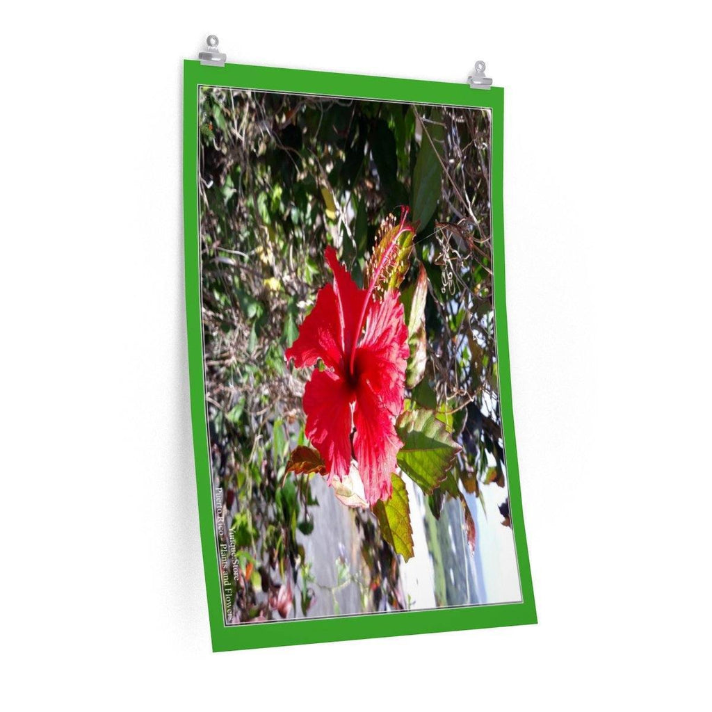 Low cost top-quality Posters - PR Plants and Flowers - Amapola Poster Printify