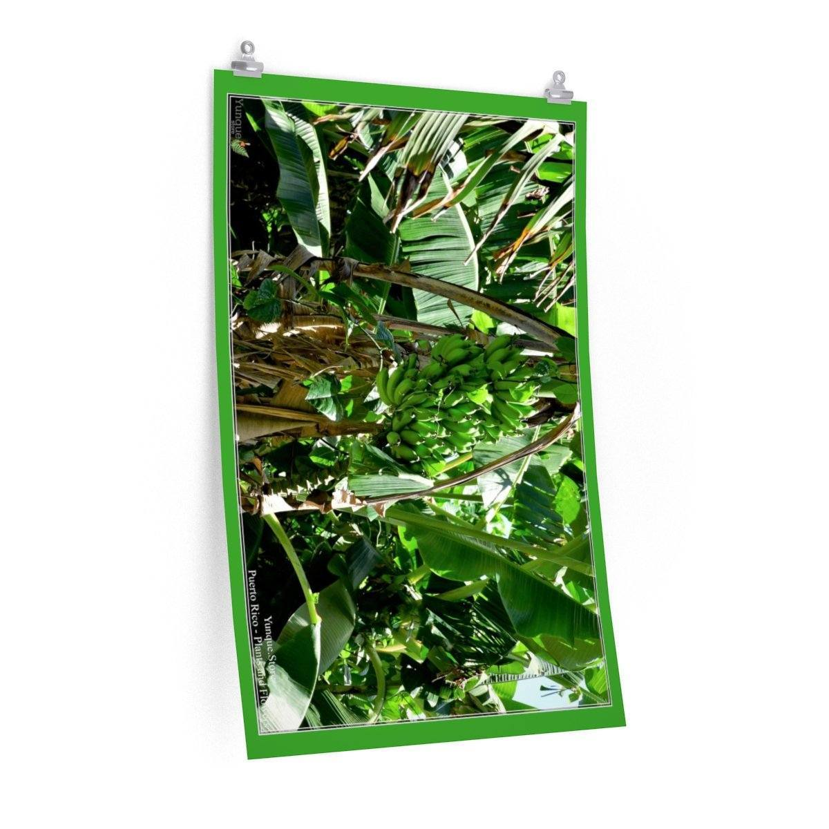 Low cost top-quality Posters - PR Plants and Flowers - Bananas Poster Printify