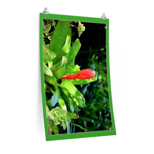 Low cost top-quality Posters - PR Plants and Flowers - Bromeliads Poster Printify