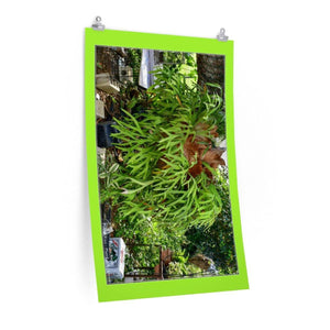 Low cost top-quality Posters - PR Plants and Flowers - Cuernos Poster Printify