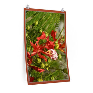 Low cost top-quality Posters - PR Plants and Flowers - Flamboyan flower Poster Printify