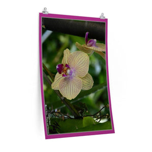 Low cost top-quality Posters - PR Plants and Flowers - orchids Poster Printify