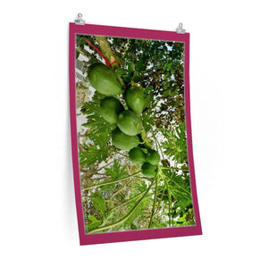 Low cost top-quality Posters - PR Plants and Flowers - Papaya Poster Printify