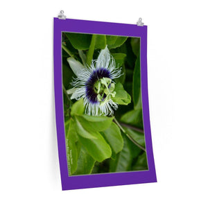 Low cost top-quality Posters - PR Plants and Flowers - Parcha or passionfruit Poster Printify