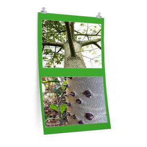 Low cost top-quality Posters - PR Plants and Flowers - Thorn Tree Poster Printify
