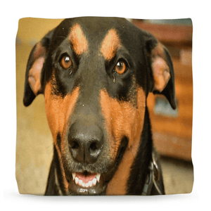Ottomans - Awesome life of Pets - Firo and other dogs of Puerto Rico - Yunque Store