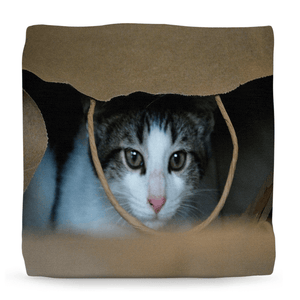 Ottomans - The Amazing Baby Cat Dante - Isabela Puerto Rico - Yunque Store