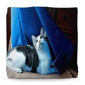 Ottomans - The Beautiful Baby CAT Dante - Isabela Puerto Rico - Yunque Store