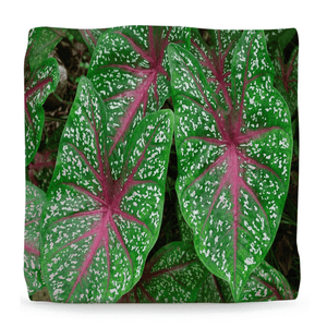 Ottomans - The Rich Geometry and Patterns of Tropical Plants - Puerto Rico - Yunque Store